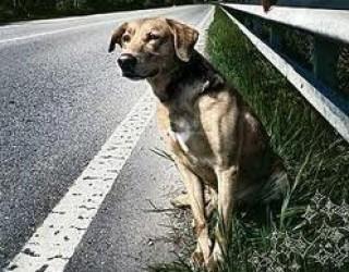 Cosa fare se incontri un cane abbandonato?