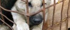 Cosa fare se vedi un animale maltrattato?