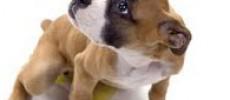 Missione Cuccioli… sta per tornare!
