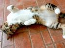 Profilassi e vaccinazioni annuali del gatto