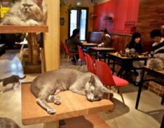 Neko Cafè, a Parigi apre il bar per gatti!