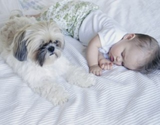 Come comportarsi con cane e gatto quando arriva un bebè?