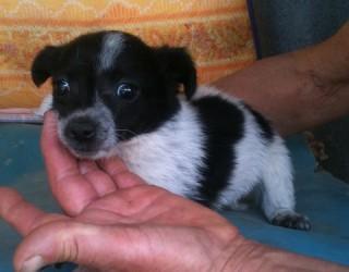 Il veterinario: una risorsa contro l'abbandono dei cani