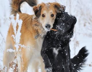 Come fare per…convivere con più cani senza problemi