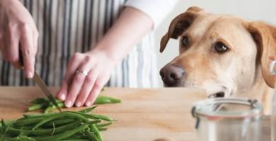 Alimentazione cani: come nutrire correttamente il tuo cucciolo e cane adulto