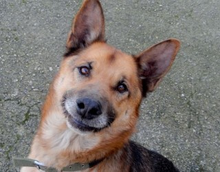 Comportamenti strani del cane: sveliamo il perchè dei comportamenti bizzarri dei cani