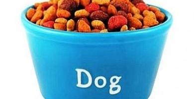 Alimentazione cani: la guida di zooplus sul cibo per cani