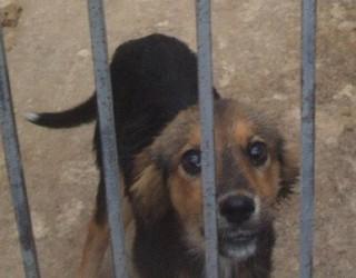 Pet terapy nelle carceri americane: un aiuto a detenuti e cani