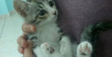 Prodotti per gatti: ciotole, lettiera, cuccia, collare e tiragraffi