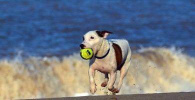 Vacanze con il cane: alcuni consigli su destinazioni al mare e in città