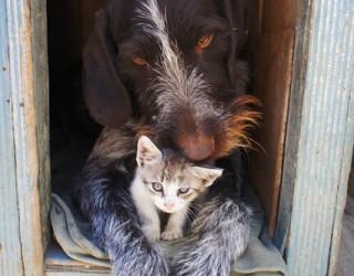 Cimitero per cani e gatti