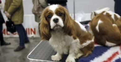 Esposizione canina internazionale a Padova