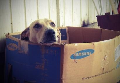 Regole per cani in condominio