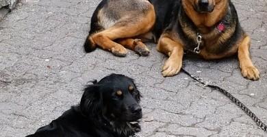 Guinzagli per cani: collari e guinzagli per cani