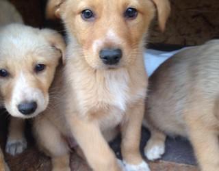 Addestramento del cucciolo: i comandi base e le regole generali per educare il vostro cane