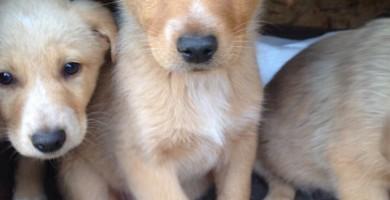 Addestramento del cucciolo: i comandi base e le regole per educare il cucciolo