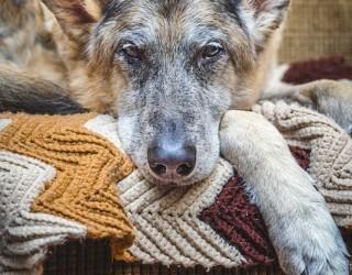 Alimentazione cane anziano: la dieta alimentare per cani anziani