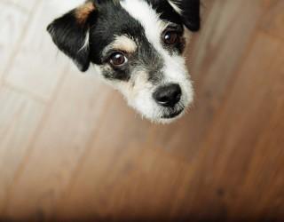 Cane fa pipì in casa: come insegnare al cane a fare i bisogni
