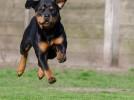 Come educare un cane al richiamo: insegnare al cane a venire