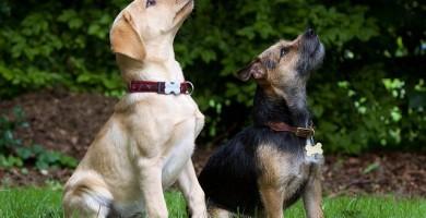 """Insegnare il comando """"seduto"""": addestrare il cane e il cucciolo a sedersi"""