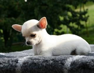 Prevenire il furto di cani: il vademecum dell'Aidaa