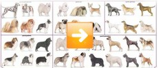 Razze cani: razze canine e classificazione cinofila