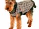 Abbigliamento per cani: nuova collezione invernale