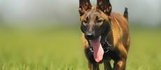 Addestramento classico o tradizionale del cane