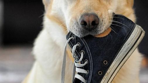 Che cosa è un percorso di addestramento cani
