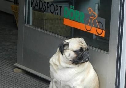 Perchè il cane è obeso? La risposta può essere di natura emotiva