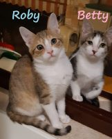 GATTI Gattini Betty e Roby, 3 mesi